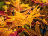Autumn shows us, how beautiful it is to let things go