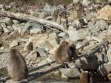 monkey gathering