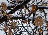 Hidden Warbler