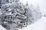 Black Forest Winter Scenery