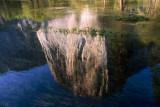 EL CAPITAN REFLECTED IN MERCED RIVER