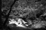 MOUNTAIN STREAM, SMOKY MOUNTAINS N.P.