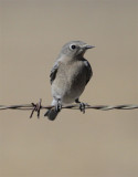 Bird Identification - Tips & Challenges