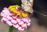 Butterfly and Aphid