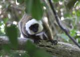 Mammals in Madagascar