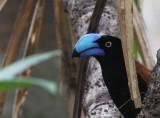 Birds in Madagascar