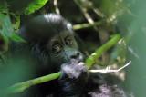 Mammals in Uganda