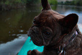 1waterdog.jpg