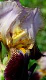 Garden flowers - summer
