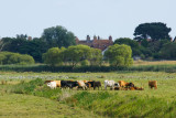 Walberswick water meadows
