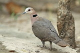 Gambia birds