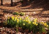Flower-Gathering