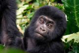 Uganda Safari 2014