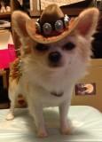 Howdy! Cowboy Taser here!