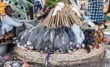 Display of Fowl for Sale