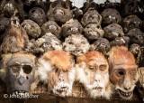 Animal Skeleton Heads