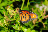 Queen at Butterfly Wonderland
