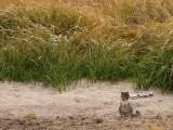 Cat on a Sandbar