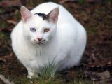 Neighborhood Fat Cat