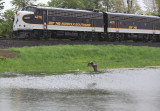 A Heron takes flight as the Derby train passes Lake Wells in a steady rain