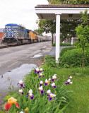 A CEFX Bluebird brings NS 376 by the blooming Iris's  at Harrodsburg