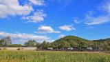 A Southbound grain train rolls through the corn fields in the Green River Dip.