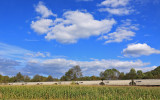Corn in the field and grain on the move South under a perfect sky near Southfork
