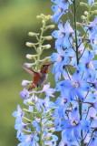 Humming Birds, Eugene, Oregon