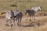 2016 Africa-1789.jpg