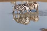 2016 Africa-1830.jpg