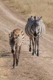 2016 Africa-1888.jpg
