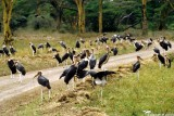 Stork, Nairobi 0401
