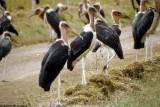 Stork, Nairobi 0403
