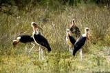 Stork, Nairobi 0405