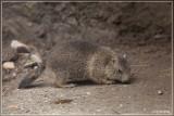 Le parc zoologique des Marécottes