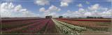 panorama 4839-4845bis.jpg