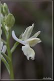 Te sorteren orchideeën