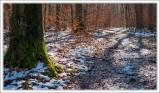 Wintery Wood