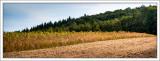 Early Autumn Fields