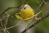 Warblers - the Tight Crops