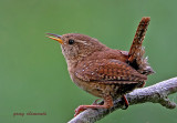 wrens of devon ( 9 )