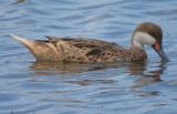 South Florida Birding 2013