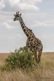 Road to Masai Mara