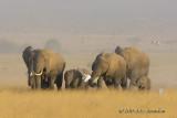 Amboselli National Park, Kenya - 12/13 Aug 2013