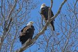 Ft Donelson Eagles