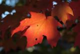 fall_nyc