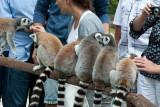 Egy nap a Veszprémi Állatkertben - A day at Veszprém Zoo