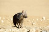 Brown Hyena At The Waterhole