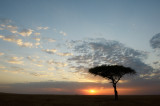 Sunset In Masai Mara