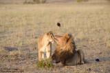 Tender Lions